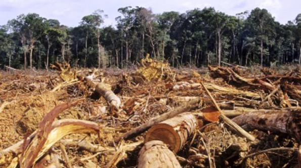 El jugoso negocio de la madera en Beni